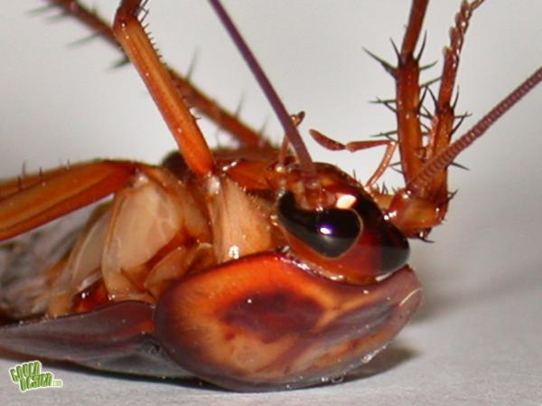 cockroach1024x7681